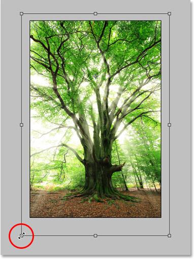 Adobe Photoshop учебное изображение.