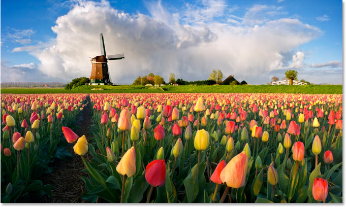 Фото голландской ветряной мельницы и цветов.