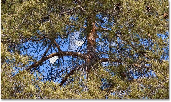 Фоновый ластик не может перепрыгнуть через ветви деревьев, чтобы удалить небо.  Изображение © 2010 Photoshop Essentials.com