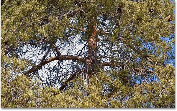 Использование фонового ластика с установленными пределами Discontiguous.  Изображение © 2010 Photoshop Essentials.com