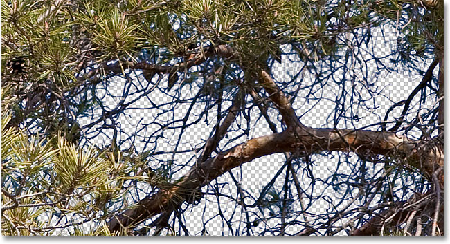 Синие полосы по-прежнему появляются вокруг некоторых ветвей деревьев.  Изображение © 2010 Photoshop Essentials.com