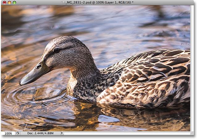 Изображение после переноса наших теневых деталей с помощью команды Shadow / Highlight в Photoshop.  Изображение © 2009 Photoshop Essentials.com