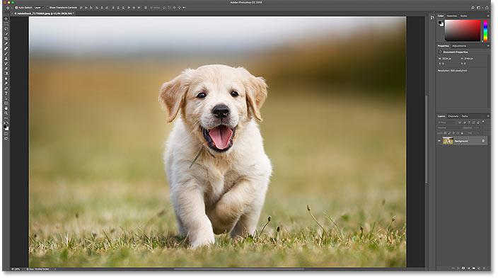 Обучающее изображение.  Фото предоставлено: Adobe Stock
