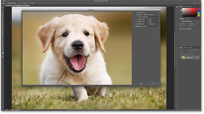 Как изменить размер диалогового окна «Размер изображения» для увеличения изображения в Photoshop