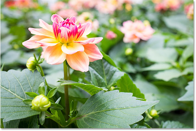 Переэкспонированное фото цветка.