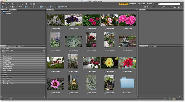 Переход к папке с изображениями в Adobe Bridge CS6.  Изображение © 2014 Photoshop Essentials.com