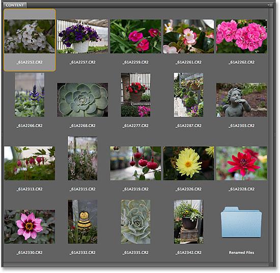 Выбор первого изображения на панели «Содержимое» в Adobe Bridge CS6.  Изображение © 2014 Photoshop Essentials.com