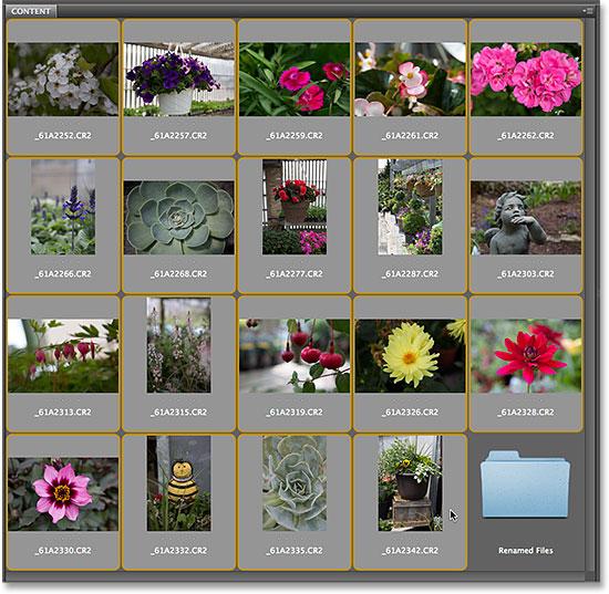 Выделение всех изображений на панели «Содержимое» в Adobe Bridge CS6.  Изображение © 2014 Photoshop Essentials.com