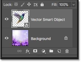 Вектор смарт-объект с иллюстрацией Illustrator в Photoshop