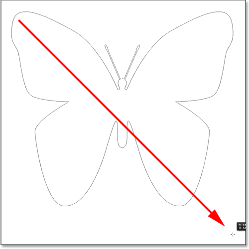 Рисование бабочки нестандартной формы в фотошопе