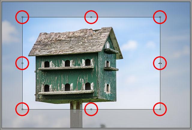 Нажмите и перетащите любой из маркеров, чтобы изменить размер поля обрезки.  Image © 2013 Стив Паттерсон, Photoshop Essentials.com