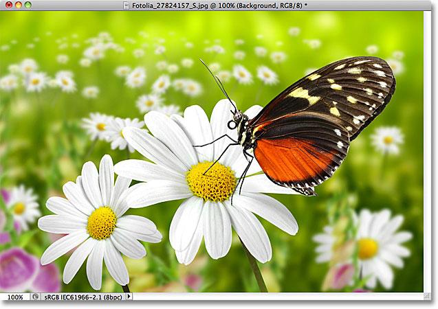 Фото бабочки.  Изображение лицензировано от Fotolia фотошопом Essentials.com
