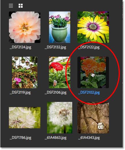 Выбор изображения для повторного открытия на панели «Последние файлы».  Image © 2016 Стив Паттерсон, Photoshop Essentials.com