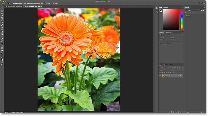 Второе изображение открывается в фотошопе.  Image © 2016 Стив Паттерсон, Photoshop Essentials.com