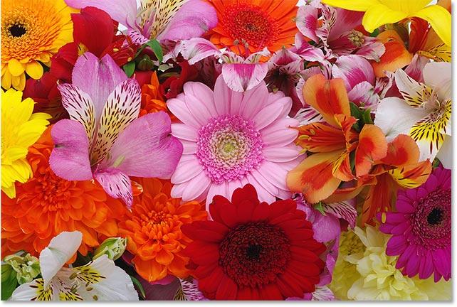 Красивые цветы.  Изображение 78245864 по лицензии Adobe Stock