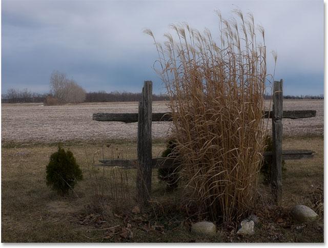 Высокорослая трава против открытого поля.