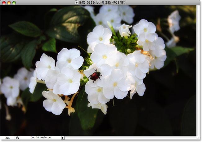 Фото жука на цветке.