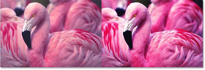 Сравнение цветовой насыщенности после увеличения контрастности изображения в фотошопе