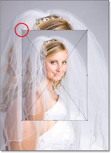 Изменение размера изображения с помощью ручек Free Transform в Photoshop.