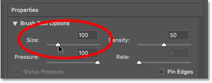 Установка размера кисти фильтра Liquify на 100 пикселей