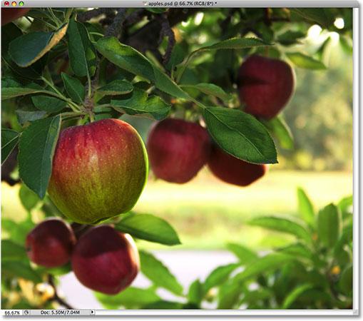Яблоко теперь раскрашено.