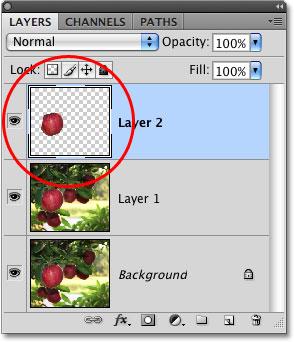 Миниатюра предварительного просмотра слоя в палитре слоев в Photoshop.