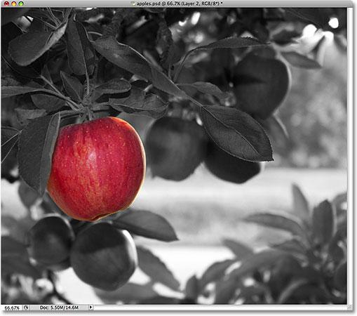 Яблоко остается в полном цвете.