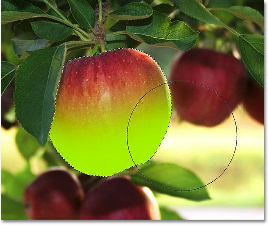 Живопись вдоль нижней половины яблока.